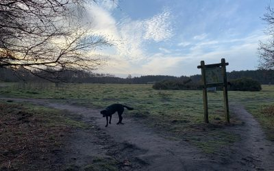 Susie's Wilde Walk in the Early Morning