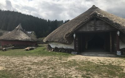 Butser Ancient Farm reopens to the public