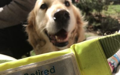 Breck, the guide dog