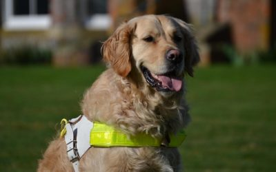 The impressive work of the UK's leading charity, Guide Dogs