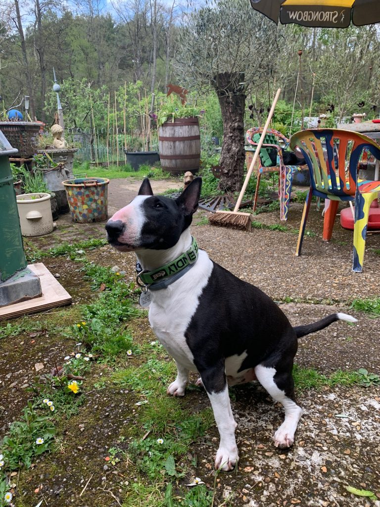 Sprout sitting alert for a treat i front of colourfully painted planters and chairs in Lizzie's garden.
