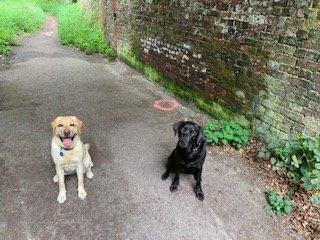 Suzie's Wilde Walk at Woolbeding Common