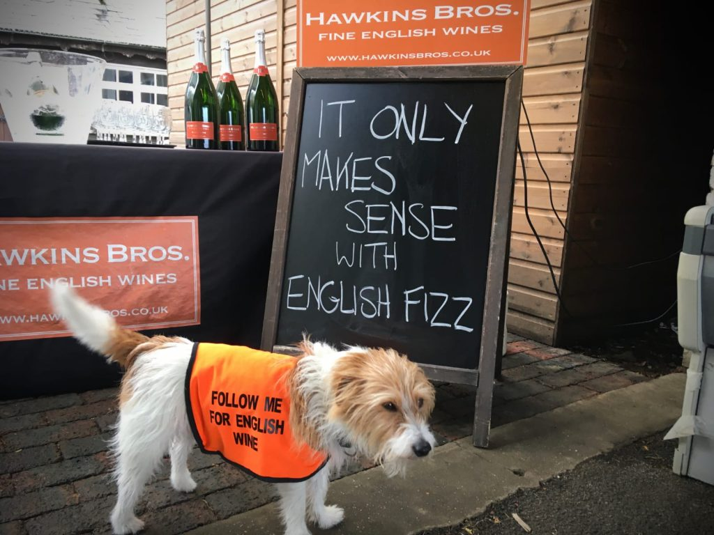 """Digby the long coated jack russell terrier in his orange uniform that says """"Follow me for English wine"""""""