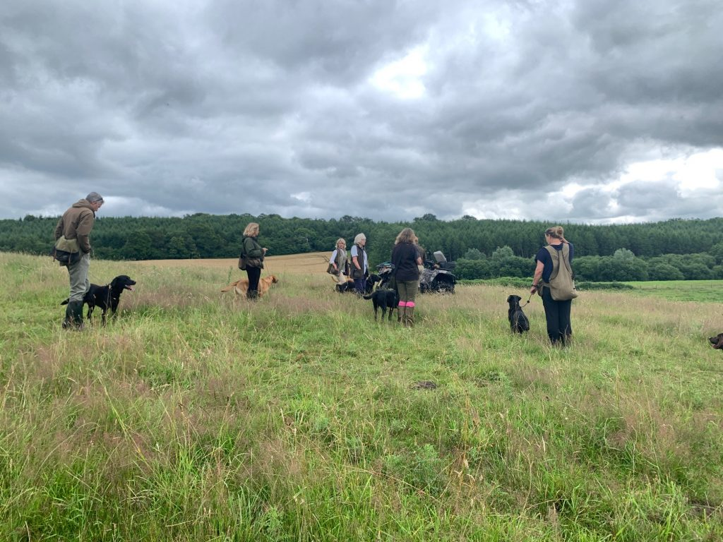 labrador gun dogs with their handlers standing on a hillside, turned away from the camera