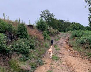 Suzie's Wilde Walk at Dawn in Durford Wood