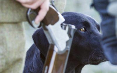 Drake, the gun dog champion