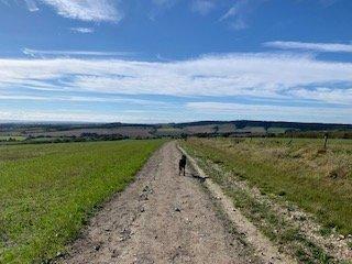Suzie's Wilde Walk at West Dean