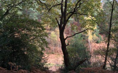 Suzie's Wilde Walk at Durford Wood
